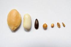 Seeds - Graines