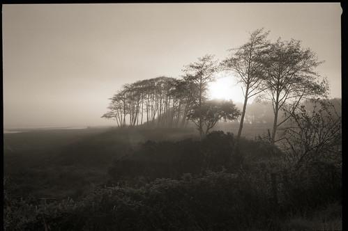 tomales dawn