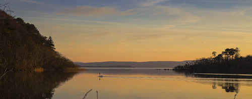 lake galway ireland water swan sun orange evening nature landscape