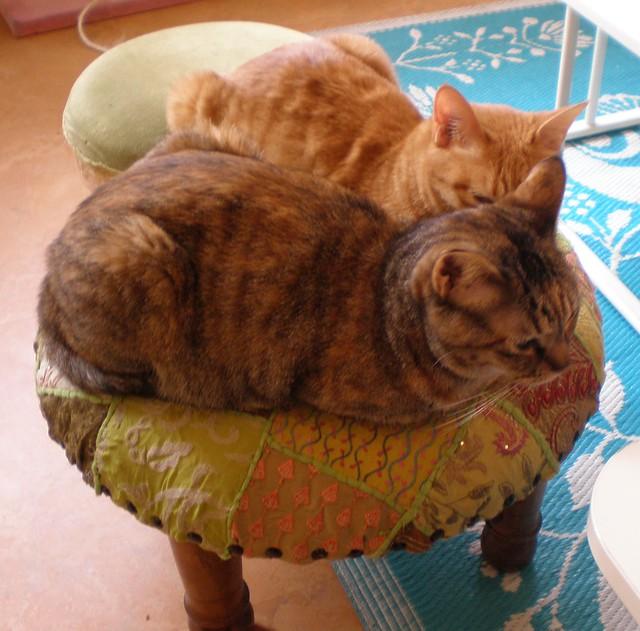 Nyafe Melange Cat Cafe Ebisu