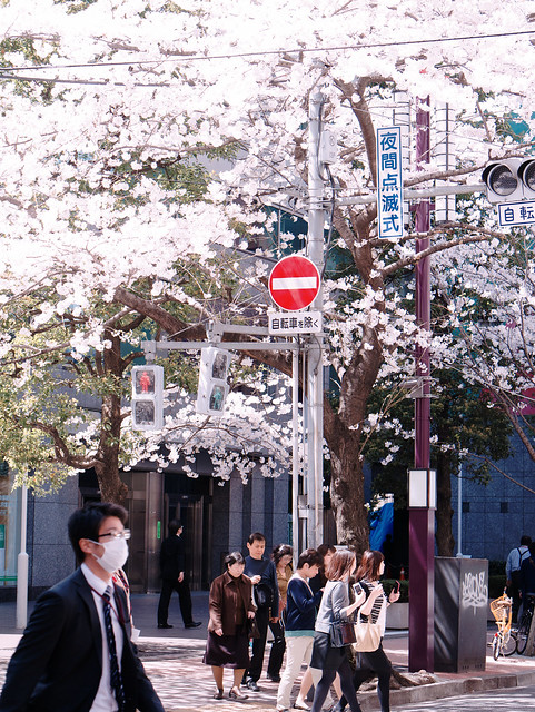 Tokyo Shines in Spring
