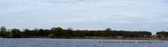 Richmond Park. Richmond upon ThaMES