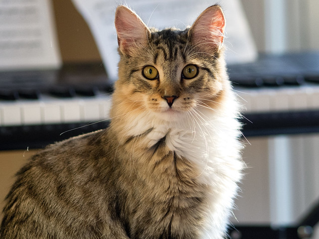 cats pink eye
