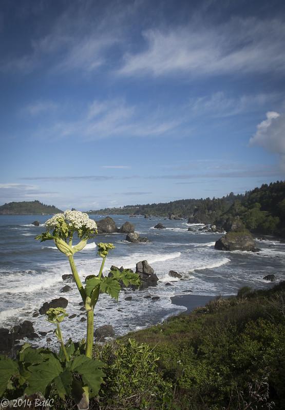 115-365 Ocean Bloom