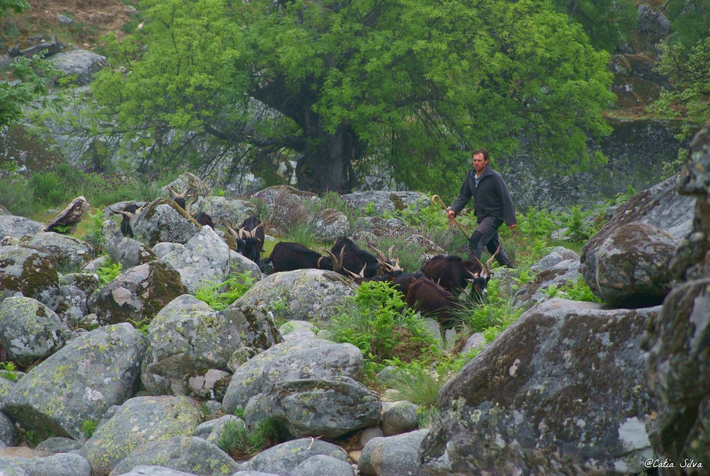 Reserva Natural de la Garganta de los Infiernos_Valle del  Jerte (15)