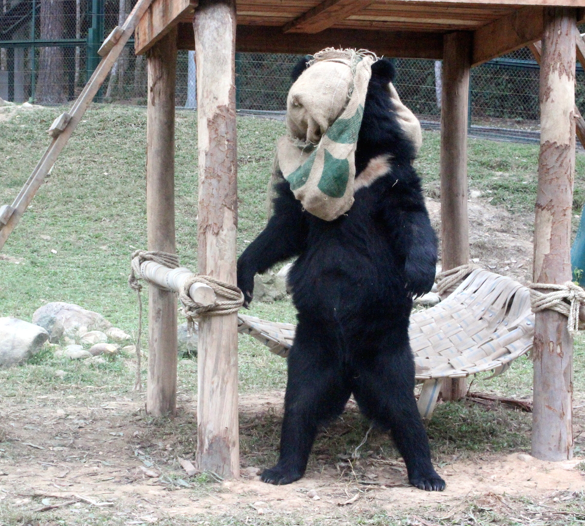mystery bear