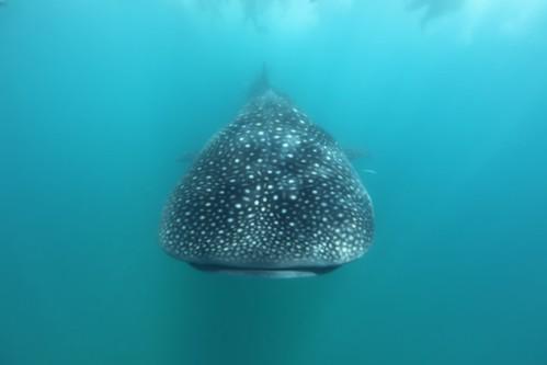 「共游」是人與海洋和解的開端嗎?