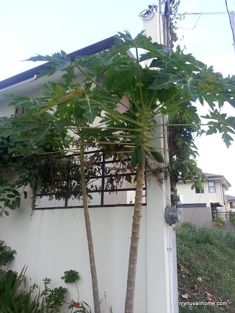Back in My Nuvali Home May2014 (4)
