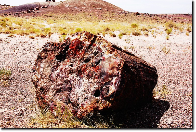 Petrified wood exposed along the Crystal Forest Loop Trail at Petrified Forest 2