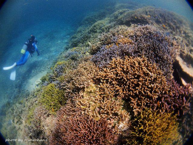 小浜島のサンゴキレイゾーン♪