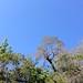 IMG 2569 Jet trail on Sawyer Camp Trail