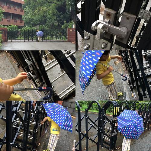 とらちゃん、雨の日の散歩 2014/6/22