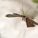 Moth by linden.g