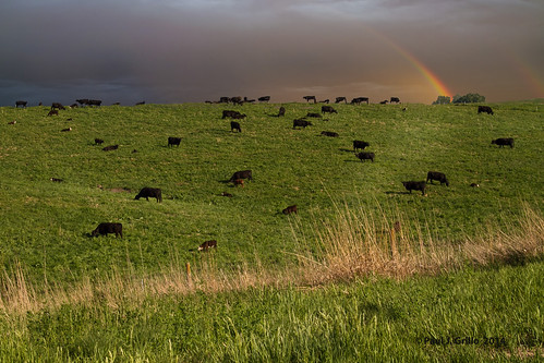 field landscape rainbow nebraska cattle