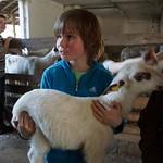 Besuch Vorkonfis Schafzucht