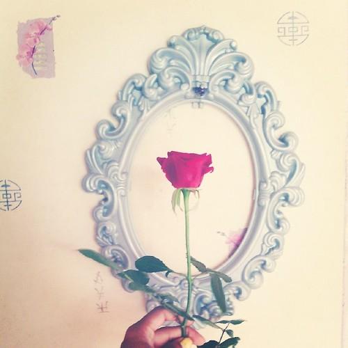 Bonjour je vous offre une rose de bon matin. Belle journée à vous. #rose #fleur #flower #pink #ourlittlefamily #france