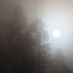 Morning fog in Canyon Village