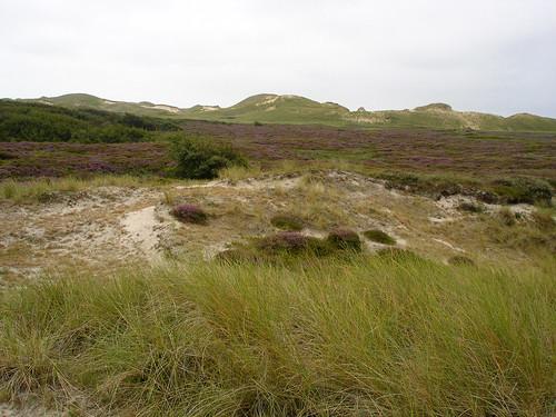Dünen von Amrum