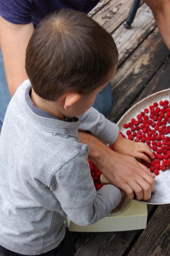 Dumping wineberries into the Cuisinart by Eve Fox, the Garden of Eating, copyright 2014