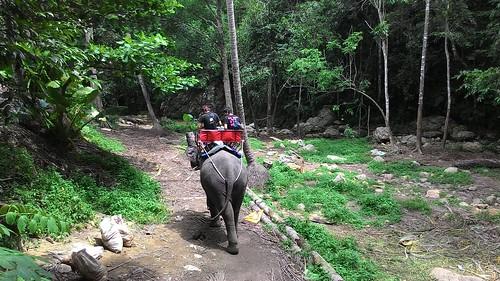 Koh Samui namuang waterfall 1 elephant trekking