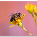 Busy Bee by Lowfloater Photography