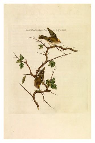 018-Reyezuelo- Nederlandsche vogelen- Nationale bibliotheek van Nederland
