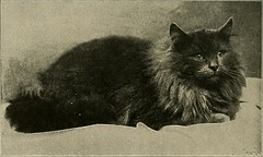 "Image from page 105 of ""Our domestic animals, their habits, intelligence and usefulness;"" (1907)"
