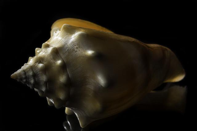 Glowing Orange Sea Shell
