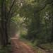 Eifel Path by Netsrak