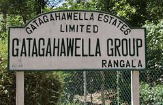 Gatagahawella Tea Estates GRB_7728