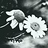 the Gorgeous Flowers ✿ group icon