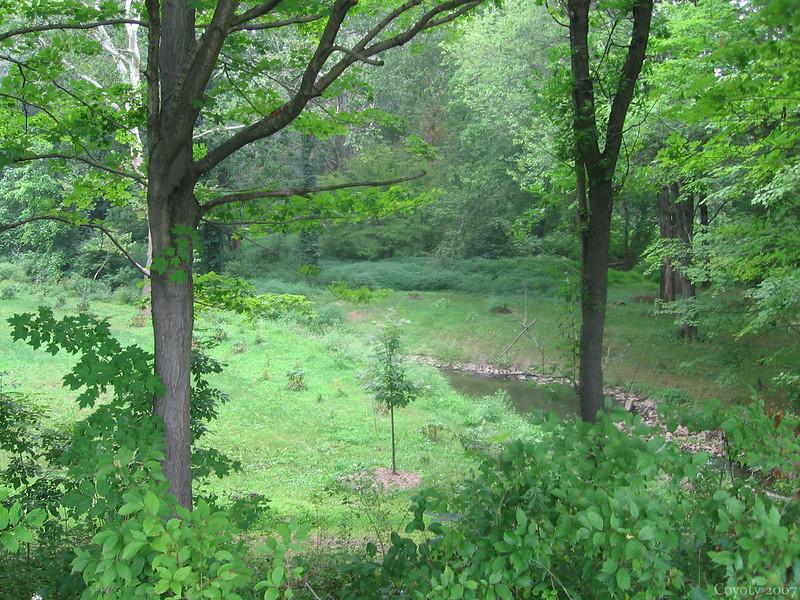 Wharton Brook