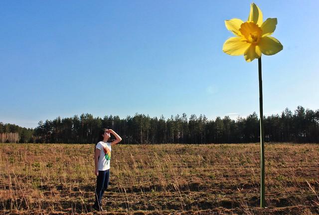 Alexandr Tikki - More than ordinary flower