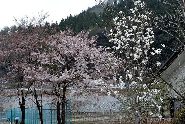 oze_japan_144_34
