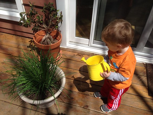 Martin Watering Plants