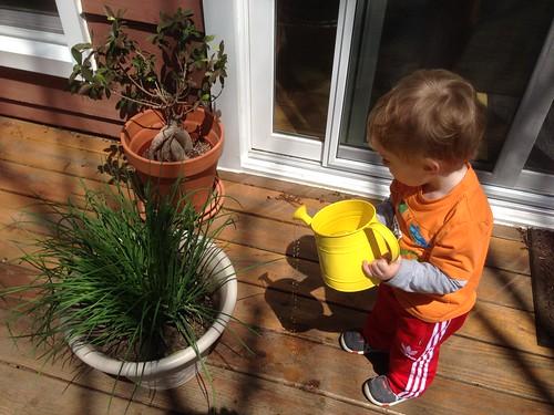 Martin Watering Plants