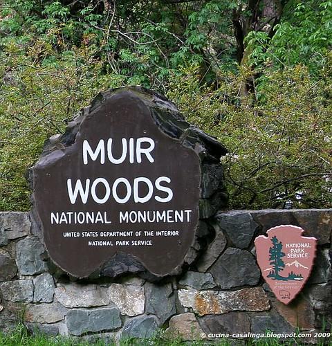 Muir Woods klein copyr