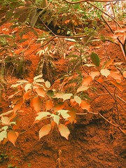 foliage groundcover understory at the bronx zoo autumnal colorized
