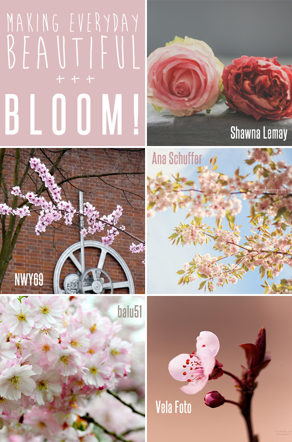 making everyday beautiful : bloom! | Emma Lamb