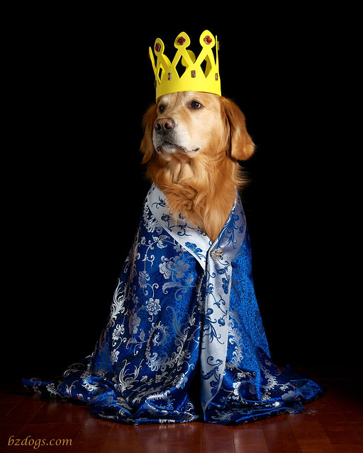 Royal Retriever