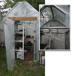My Greenhouse