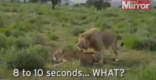 动物的电视节目在进行现场直播时