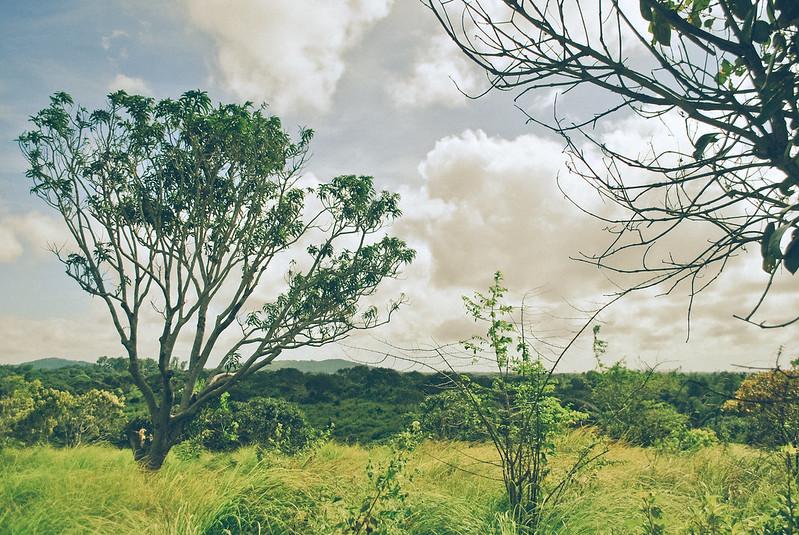 The Mango Plantation in Guimaras