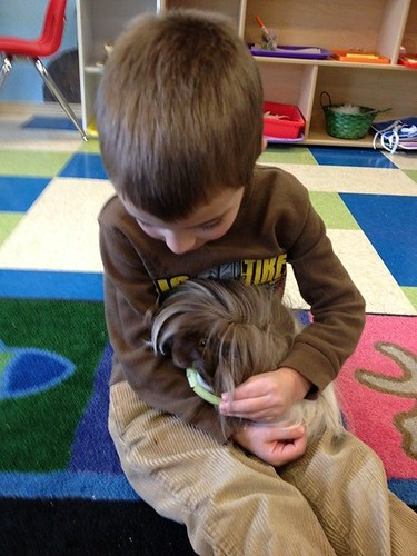 Care of Classroom Guinea Pig (Photo from Discovery Kidzone Montessori Adventures)