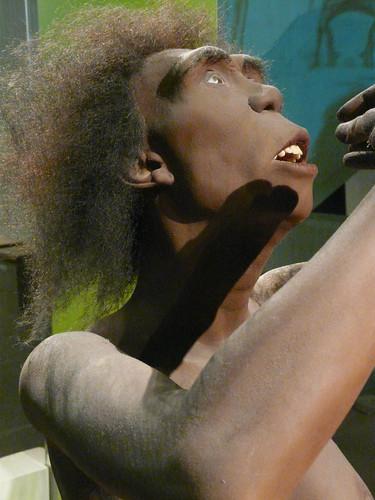 Homo-erectus-Frau