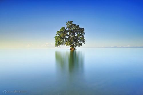 longexposure tree sunrise image dream sabah zakies