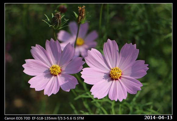 20140413_Flowers