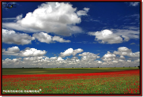 blue red sky cloud paisajes naturaleza white color verde green primavera blanco colors weather azul clouds canon landscape landscapes spring spain rojo natura paisaje colores cielo nubes poppy poppies llanos nube lamancha llano mancha castillalamancha llanura manchuela casasimarro antoniozamora manchuelaconquense