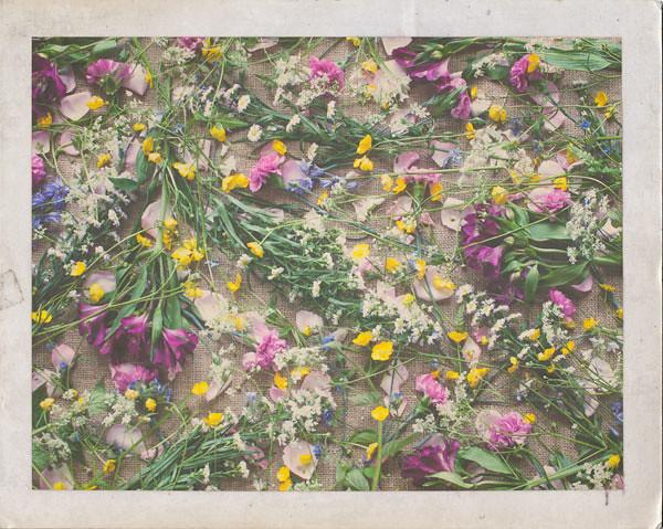 Polaroid Flower Scatter