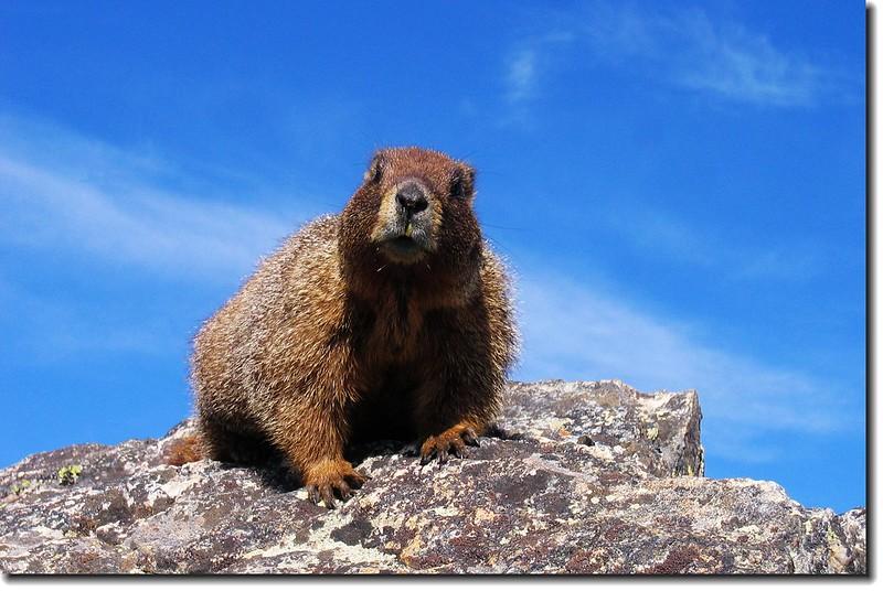 Marmot 5